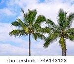 hawaiian coconut palm trees in... | Shutterstock . vector #746143123