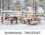 reindeer sledge  in winter ... | Shutterstock . vector #746153167
