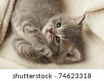 Stock photo funny kitten 74623318