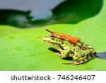 a frog with a orange leaf on... | Shutterstock . vector #746246407