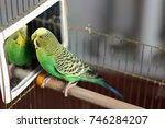 a wavy parrot is sitting in... | Shutterstock . vector #746284207