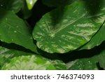 waterdrops on a leaf | Shutterstock . vector #746374093