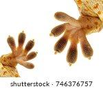 Close Up Gecko Leg Finger Geck...