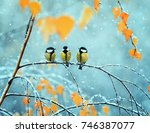 Stock photo portrait of three cute birds tits in the park sitting on a branch among bright autumn foliage 746387077