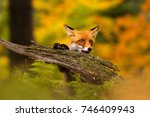 beautiful young fox in colorful ... | Shutterstock . vector #746409943