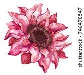fall flower. watercolor...   Shutterstock . vector #746478547