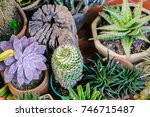 many type of cactus plant in... | Shutterstock . vector #746715487