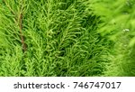 green plant and nature tree... | Shutterstock . vector #746747017