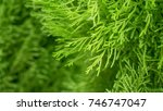 green plant and nature tree... | Shutterstock . vector #746747047