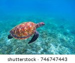 swimming sea turtle in blue... | Shutterstock . vector #746747443