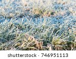Frost On The Grass In November.