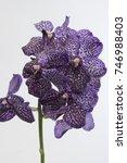vanda spotty aubergine | Shutterstock . vector #746988403
