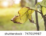 leaves are destroyed by