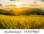 landscape of green rice fields. ... | Shutterstock . vector #747079807
