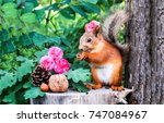 squirrel with nuts and flowers... | Shutterstock . vector #747084967