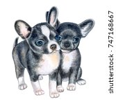 Cute Chihuahua Puppies Isolate...