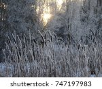 Small photo of frozen winter landscape with forest background and calamus in the foreground