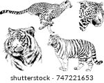 set of vector drawings on the... | Shutterstock .eps vector #747221653