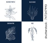 vector collection of four hand... | Shutterstock .eps vector #747247993