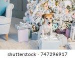 happy christmas dog jack... | Shutterstock . vector #747296917