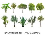 isolated tree on white... | Shutterstock . vector #747328993