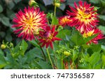 dahlia weston spanish dancer... | Shutterstock . vector #747356587