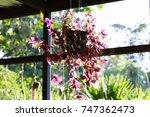 purple flower in pot hanging... | Shutterstock . vector #747362473