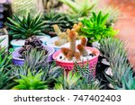 many type of cactus plant in... | Shutterstock . vector #747402403