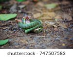 Green Mamba Snake  Dendroaspis...