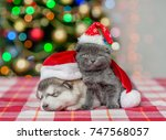 Stock photo kitten and sleeping puppy in red christmas hats on a background of the christmas tree 747568057