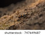 beautiful cockroach | Shutterstock . vector #747649687