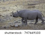 african white and black rhino | Shutterstock . vector #747669103