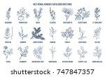 best herbal remedies for... | Shutterstock .eps vector #747847357