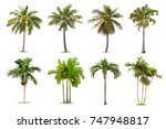 coconut and palm trees isolated ... | Shutterstock . vector #747948817
