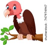 cute vulture bird cartoon on... | Shutterstock . vector #747974947