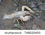 white shrimp on the forest floor | Shutterstock . vector #748020493