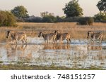 animals of the okavango delta... | Shutterstock . vector #748151257