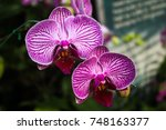 purple orchid in the garden | Shutterstock . vector #748163377