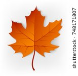 autumn leaf isolated on a white ... | Shutterstock .eps vector #748171807