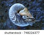 nautilus in deep sea | Shutterstock . vector #748226377