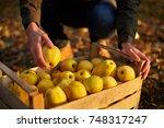 man puts yellow ripe golden...   Shutterstock . vector #748317247
