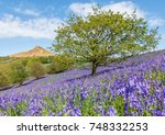 Roseberry Topping Bluebells