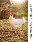 look of strong cock | Shutterstock . vector #748366147