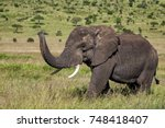 elephant with his trunk up in... | Shutterstock . vector #748418407
