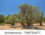 landscape with old olive trees | Shutterstock . vector #748753477