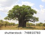 her majesty   the baobab 2  | Shutterstock . vector #748810783