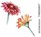 wildflower gerbera flower in a... | Shutterstock . vector #748836847