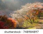 nagoya  obara. autumn landscape ...   Shutterstock . vector #748984897
