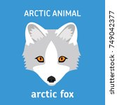 animals of the arctic. the head ... | Shutterstock .eps vector #749042377