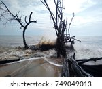 Small photo of wave hit old tree in yad beach